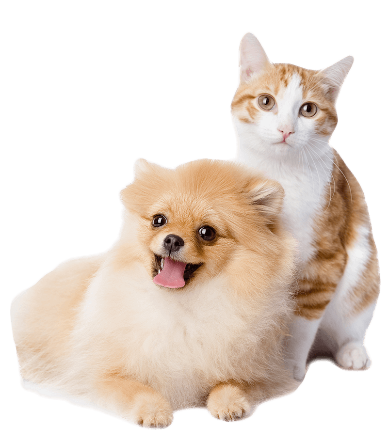 We Lov Pets Your Local Pet Knowledge Store